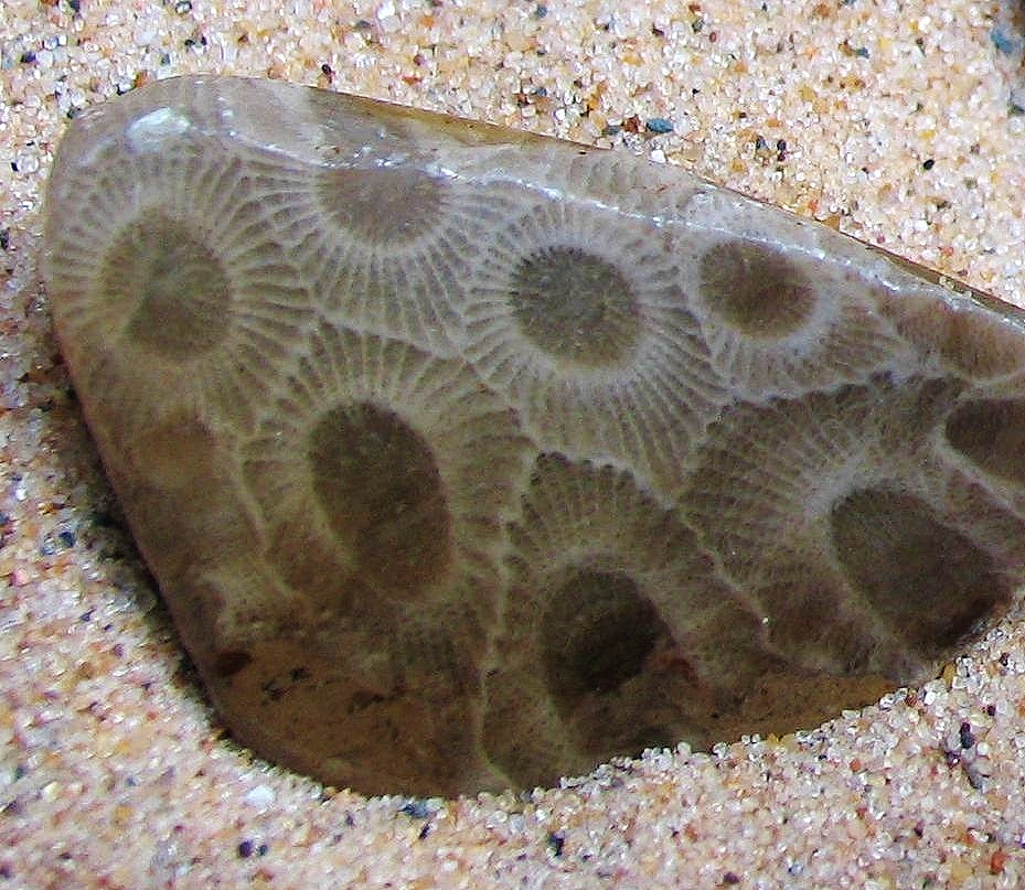 The Legend of the Petoskey Stone | Native Heritage Project