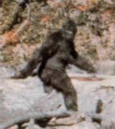 Bigfoot is Real???